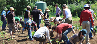 Intensive Organic Gardening workshop image