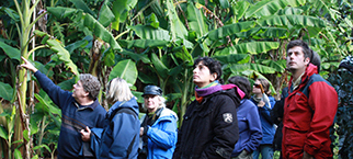 Tree Crops workshop image
